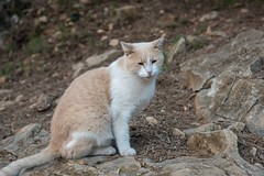 Katze (Burnett0305) Tags: autumn balearicislands balearischeinseln fall herbst majorca mallorca nikonafs24120mmf40vr nikond750 spain spanien espana