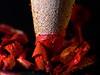 Red Crushing (MacMyc) Tags: macro macrophotography grosplan closeup reverselens reversedlens objectifinversé pensil crayon chip shavings copeaux épluchures pencillead minedecrayon coloré colorful canon700d raw lightroom red rouge écraser crush blur flou lampetorche flashlight torchlight