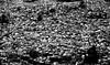 Morocco in Black and White (wojofoto) Tags: morocco marokko buildings houses zwartwit blackandwhite schwarzweiss monochrome wojofoto wolfgangjosten chefchaouen cemetery graveyard begraafplaats