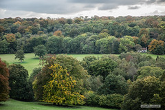 "The broad-leafed splendour of the Surrey Hills. (Scotland by NJC.) Tags: surrey england tannershatchyouthhostel forest woodland plantation trees grove ""temperate rainforest"" غَابَة floresta 森林 šuma les skov bos ""bosque grande"" metsä forêt wald δάσοσ foresta skog las pădure hill تَلّ colina 小山 brdo kopec bakke forhøjning landskabet heuvel mäki colline hügel λόφοσ collina 丘 언덕 ås wzgórze deal холм backe เขาเตี้ยๆ tepe coğrafya пагорб đồi westhumble ranmorecommon"