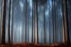 # Les piliers # (Thomas Vanderheyden) Tags: arbres tree pilier forest foret nature paysage mood halatte picardie oise thomasvanderheyden fujifilm fog ambiance atmosphere brume brouillard blue red colors couleur beautifulearth ngc