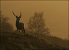 In the hills above Loch Ness. (McRusty) Tags: loch ness red stag deer antlers low light evening glow misty monadhliath mountains natural beauty outdoors great glen highland scotland