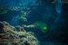 Dinner! (RoamingTogether) Tags: anguilliformes diving eel florida floridakeys johnpennekamp keylargo morayeel muraenidae pennekampstatepark scuba scubadiving snapperledge watersports