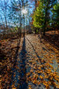Long Shadows On The Trail (John Kocijanski) Tags: shadows trail leaves trees sun sunflare fall autumn canon5dmkii canon1740mmllens sullivancounty bashakill landscape nature