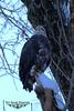 DSC_2339 -1 (lurchnsassy) Tags: breakthroughphotographyfilters conowingoeagles conowingodam sunrise markbennettphotography nikon nikononinstagram nikond750 nikkorlenses nikkor24120 nikonlens nikonlenses nikonusa longexposureshots longexposure longexposures raptor baldeagle baldeagles birdsofprey