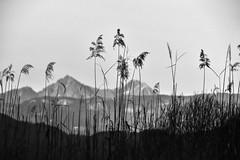 Caldaro (lucamarasca1) Tags: italia outdoor visuale italy paesaggio monocromatico monocrome blackwhite blackandwhite bianconero bnw südtirol suedtitol bolzano altoadige background landscape natura montagna mountain montagne mountains