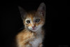 Ona (leporcia) Tags: animales animals animalplanet cat cats chat chatterie chatsdomestics gatos gato gatto gatito gatorubio katzen katze kitty kitten redcat ona felino feline
