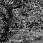 TorupsTräd thumbnail