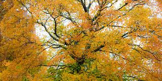 秋天的怀抱