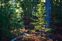 Edit -1-14 (Dane Van) Tags: canadacreekranch atlantamichigan sunrise nature goodprana canon5d
