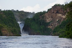 Murchison Falls Uganda _E1U9228 Nov 2016 (www.sabrewingtours.com) Tags: murchison fall national park uganda african birding expo sabrewing nature tours snt photo tour brian zwiebel bz tourism eco river kabalega white nile thepearlofafrica conservation entebee 2016