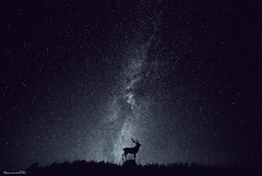 Night (Marco San Martin) Tags: night constellation silhouette animals beautiful noche constelación graphicdesign myjob myart creativeart art arte landscape paisaje manipulation retouch fineart deer ciervo design photoshop marcosanmartin marcosanmartinfotografia composition myartwork nature estrellas stars heaven