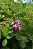 DSC_3069 (facebook.com/DorotaOstrowskaFoto) Tags: ogródbotaniczny kwiaty