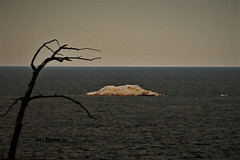 DESOLATION (Jan Nagalski) Tags: desolation desolate dark pollution polluted death deadtree island desertisland lake lakesuperior presqueisle jannagalski jannagal minimalism silhouette