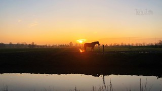 Silhouette of horse in sunset, Driebergen, Netherlands - 0381