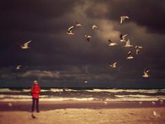 A flock of seagulls (Maciej Lemanik) Tags: sea shore baltic sand waves clouds birds seagulls sky water