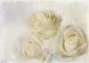 White as snow. (BirgittaSjostedt) Tags: rose flower nature plant card texture paint unique romantic highkey