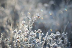 frost and rainbows (Emma Varley) Tags: frost winter cold heather bokeh rainbow rainbows heathland westsussex december pretty dreamy soft frozen