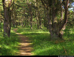 20150709_03 Path through beach forest | Sandviken, Gotland, Sweden (ratexla) Tags: ratexlasgotlandtrip2015 gotland 9jul2015 2015 canonpowershotsx50hs sandviken sweden sverige scandinavia scandinavian europe beautiful earth tellus photophotospicturepicturesimageimagesfotofotonbildbilder europaeuropean summer travel travelling traveling norden nordiccountries roadtrip journey vacation holiday semester resaresor landscape nature scenery scenic ontheroad sommar trail path stig hiking hike forest skog green favorite