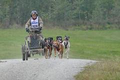Schlittenhunderennen_155