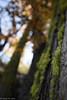 Bokeh (Chad M. Lane) Tags: wildlife nature outdoors traveling tamron1530mmf28vc nikon nikond810 wideangle 30mm beautiful fall fallcolors moss oak leaves leaf sun sunburst starburst blue bokeh shallowdof hiking enjoy love life lowpro