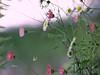 Wild. Rota do Românico, norte de Portugal. 💙 (salsol - Sham'C ♈) Tags: quinta da lage northern portugal flowers flors beleza beauty color colour wildflowers silvestres europe music adele nature natural elegant stylish bokeh wild