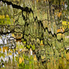 Autumn abstract (kimbenson45) Tags: abs autumn black colorful colors colourful colours distorted distortions fall green movement nature reflected reflection rippled ripples river water waterway white yellow