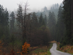 road to November (michaelmueller410) Tags: nebel forest mist fog clouds trees autumn fall herbst strasse strase wald bäume wolken harz gras grass leaves
