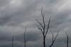 Awaiting Birds at Beaver Marsh (smfmi) Tags: trees cuyahogavalleynationalpark ohio beavermarsh deadtrees frohm
