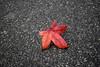 Urban fall season - atana studio (Anthony SÉJOURNÉ) Tags: fall season street asphalt feuilles rue automne urbain atana studio anthony séjourné flickrunitedaward