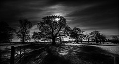 Contre Jour Force Majeure (p.g604) Tags: contre jour force majeure little gaddesden silhouettes shadows bw blackwhite monochrome field trees pasture sheep grazing contrast atmosphere noon horizon england uk gb united kingdom pentax k1