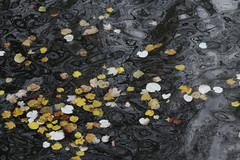 The End of the Fall (majamacanovic) Tags: november fall autumn leaf leaves water channel bruges yellow nature abstract minimalism