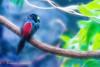 Wild but Quiet (frederic.gombert) Tags: bird animal feather blue black red green tree zoo texas houston macro wild sony light heat