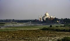 Taj Mahal from Agra fort (timhughes8) Tags: d500 yamuna river agra india taj mahal