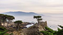 Lone Cypress (Rich Road) Tags: 17miledrive pacificcoast pacificcoasthighway montereybay pebblebeach pacificgrove pacificocean californiacoast