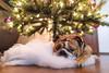 Holiday Bokeh (charmainesenaphotography) Tags: holidays bokeh low light xmas christmas tree clouds snow pets puppies dogs animals bulldogs bullies englishbulldogs smushface cute