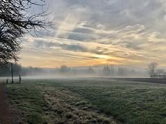 Fog and frost (piranhabros) Tags: freezing mist tree fog frost clouds sunrise dawn morning morningrun