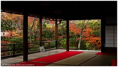 End of autumn, Diaho-in temple, Kyoto (Damien Douxchamps) Tags: japan 日本 japon kansai 関西 kinki 近畿 kyoto 京都 右京 ukyo ukyou west western 妙心寺 templecomplex myoushinji myoshinji temple お寺 寺院 卍 仏閣 大法院 daihoin autumn autumncolors 庭園