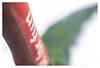 Fun (leo.roos) Tags: fun red green rood groen meyerprimotar5028 1959 exakta a7rii week502017 dyxum challenge darosa leoroos day2