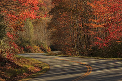 Autumn Drive (Jo McD) Tags: autumn trees tree colour northcarolina blueridgemountains blueridgeparkway road shadows