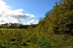 Nature Forest (JaapCom) Tags: jaapcom trees clouds bomen bos bossen zalk zalkerbos dutchnetherlands overijssel landscape nature holland autumn green nikon d5100
