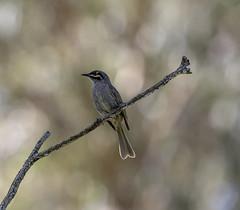 Bokeh Bird (archie0) Tags: bird perch bokeh dof