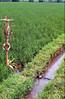 Plot srine in Bali's Subak system (water.alternatives) Tags: indonesia bali subak