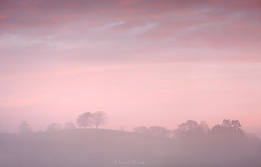 Infusion (Sarah_Brooks) Tags: candyfloss sunrise dawn landscape mist misty autumn somerset trees hill pink pastelsky morning