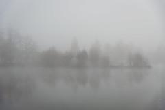misty islands (Florian Grundstein) Tags: see wasser oberpfalz bayern spiegelung reflection trees fog
