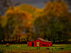 red barn (migueldeozarko) Tags: barn red chickens horse