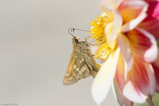 Butterfly 2017-161