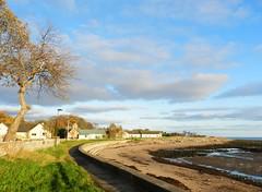 Autumn Light, Golspie Beach, Sutherland, Nov 2017 (allanmaciver) Tags: golspie beach sutherland north east coast tree sand sea shore autumn light seaweed green grass clouds pink allanmaciver