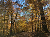 Cylburn Arboretum ~ golden delicious walk (karma (Karen)) Tags: baltimore maryland cylburnarboretum parks trails woods trees goldleaves fallcolor iphone cliche hcs topf25