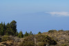 Tenerife (RS_1978) Tags: lenstagger sony sonyalpha7rii spanien wald espagne españa forest forêt ilce7rm2 spain adeje canarias es